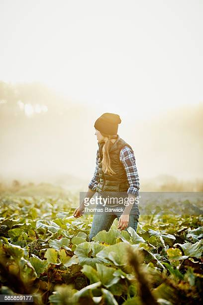 Organic farmer standing in field during harvest