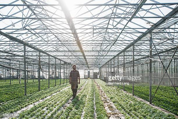 Organic farmer walking through greenhouse