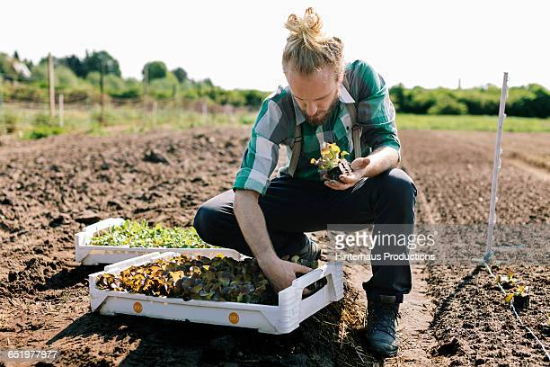 Organic Farmer with young Plants