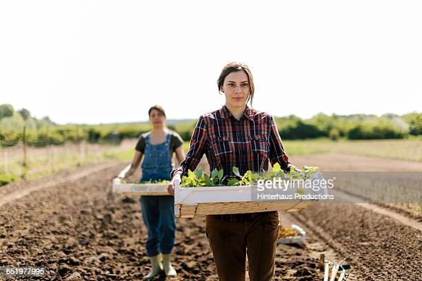 organic farmer with young plants - organic farm stock pictures, royalty-free photos & images