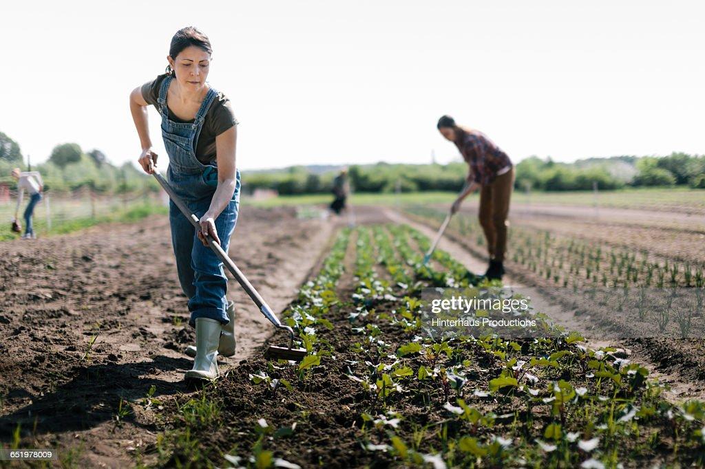 Organic Farmer working in Field : Stock Photo