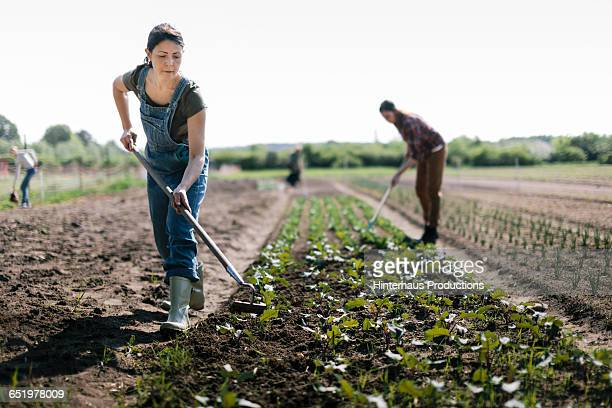 organic farmer working in field - gummistiefel frau stock-fotos und bilder