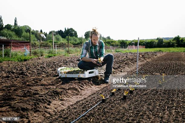 organic farmer worknig with plants - organic farm stock pictures, royalty-free photos & images