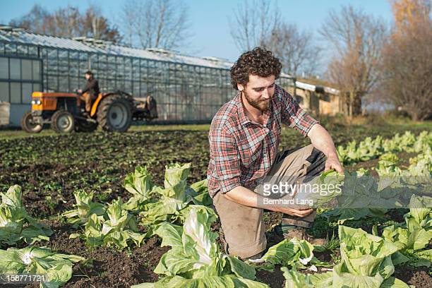 Organic farmers working on field