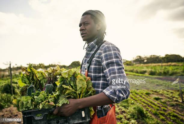 organic farming is the natural way - agricultural occupation stock pictures, royalty-free photos & images