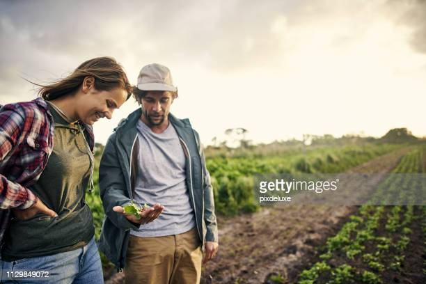 organic farming, it's about quality not quantity - crop plant stock pictures, royalty-free photos & images