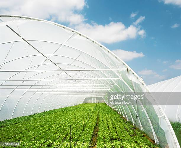 organic food - big bulge stock pictures, royalty-free photos & images