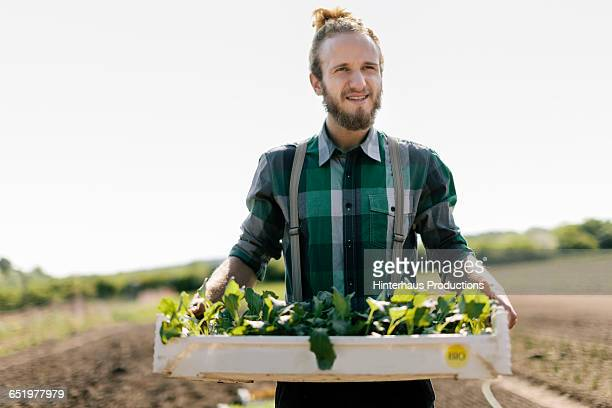 Organic Framer carrying tray of young Plants