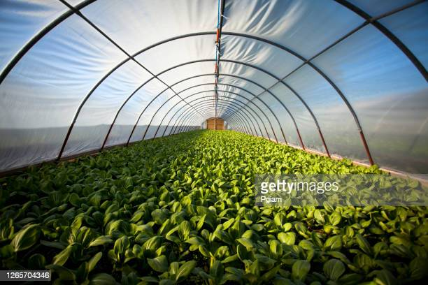 organic greenhouse - protection stock pictures, royalty-free photos & images