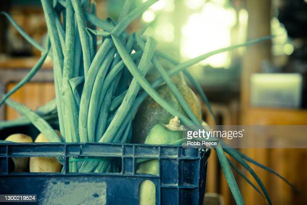 organic harvested vegetables in an outdoor kitchen in costa rica - robb reece stock pictures, royalty-free photos & images