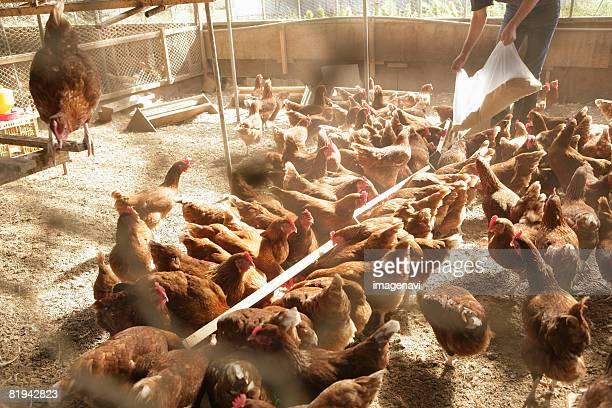 Organic henhouse
