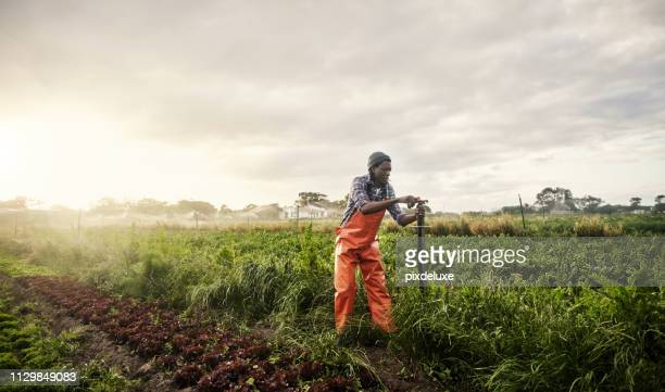 organic is just better - irrigation equipment stock pictures, royalty-free photos & images