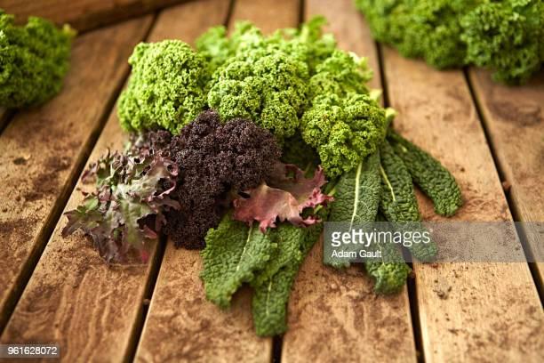 Organic Kale Varieties