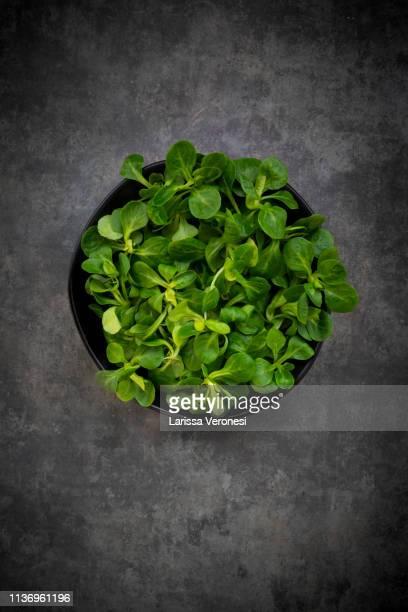 organic lamb's lettuce - larissa veronesi stock-fotos und bilder