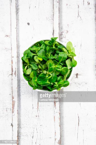 organic lamb's lettuce - green salad stock pictures, royalty-free photos & images