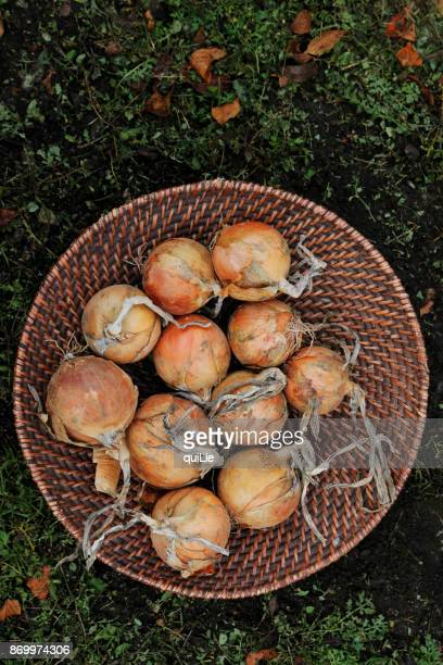Organic onions in basket