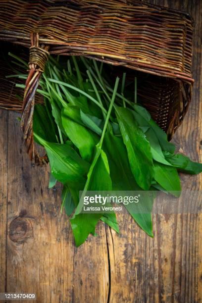 organic ramson on dark wood - larissa veronesi stock-fotos und bilder