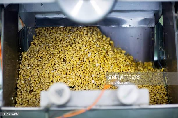 organic tofu production factory - sigrid gombert stock-fotos und bilder