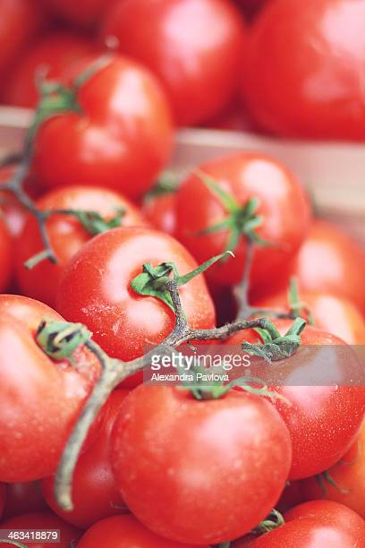 organic tomatoes at a market - alexandra pavlova stock pictures, royalty-free photos & images