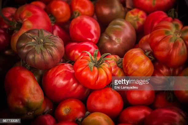 Organic tomatoes ready for sale