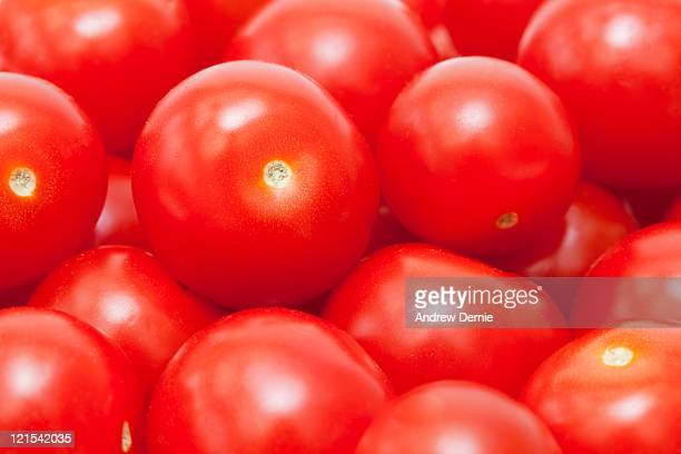 organic tomotoes - andrew dernie stock pictures, royalty-free photos & images