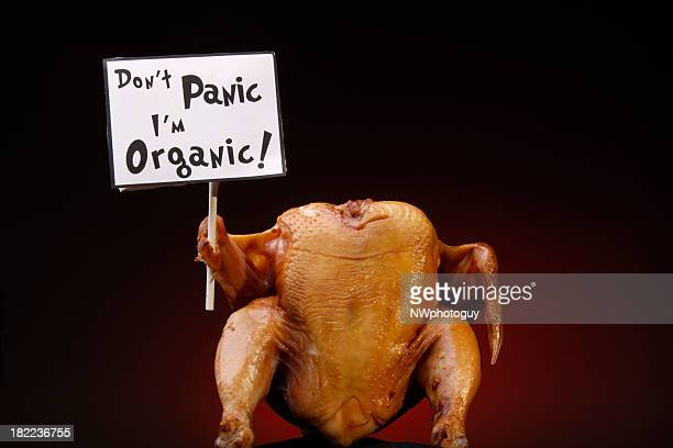 organic turkey protesting - happy thanksgiving card stock pictures, royalty-free photos & images