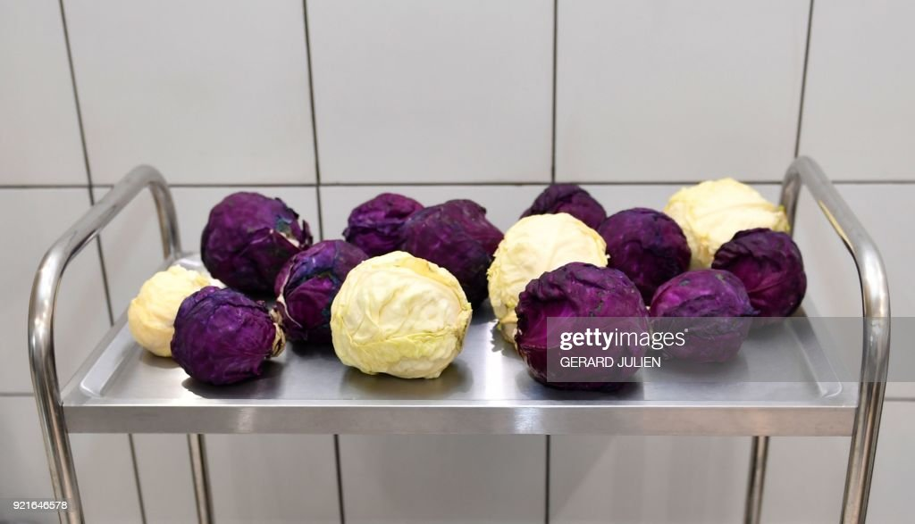 Organic white and red cabbages are pictured on February 20, 2018 in Saint-Denis d'Authou, northwestern France. /