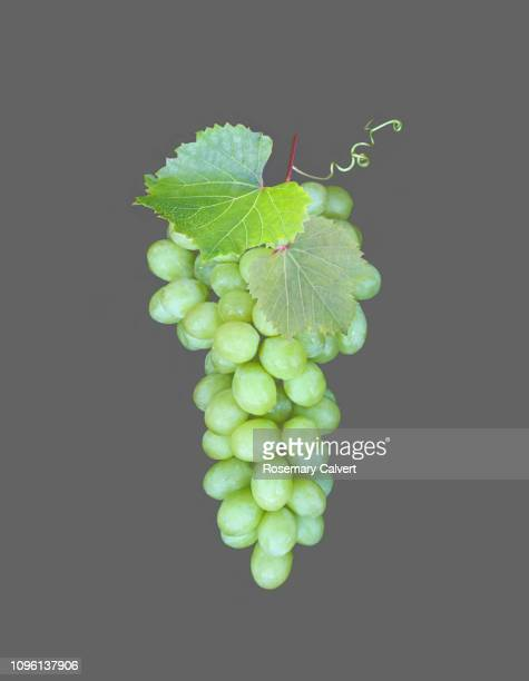 Organic white grapes on grey.