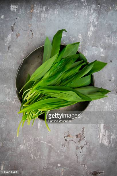 organic wild garlic, allium ursinum, on plate - ail des ours photos et images de collection