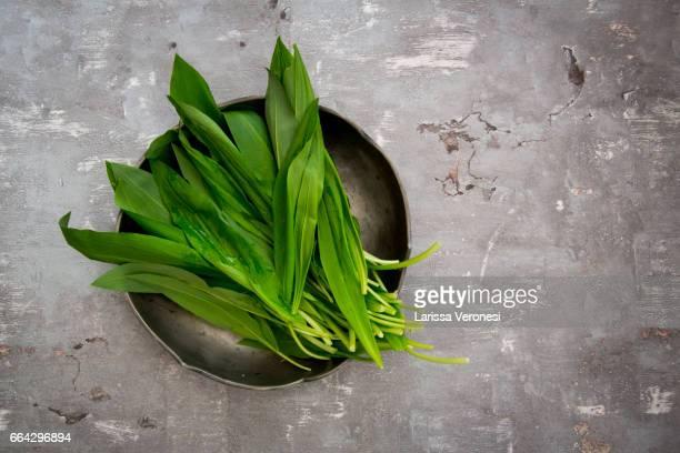 Organic Wild garlic, Allium ursinum, on plate