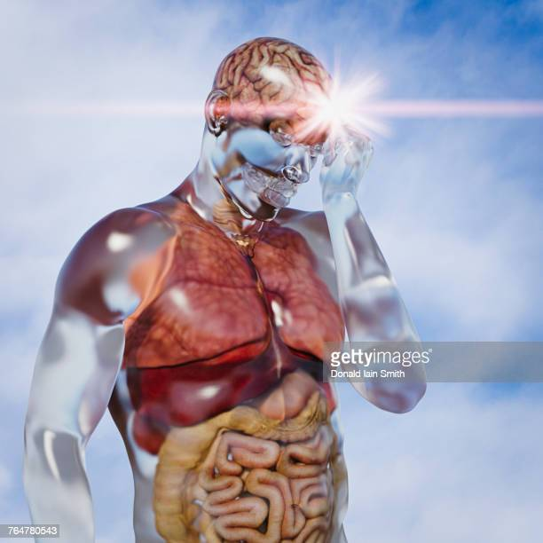 organs in transparent man - human liver stock photos and pictures