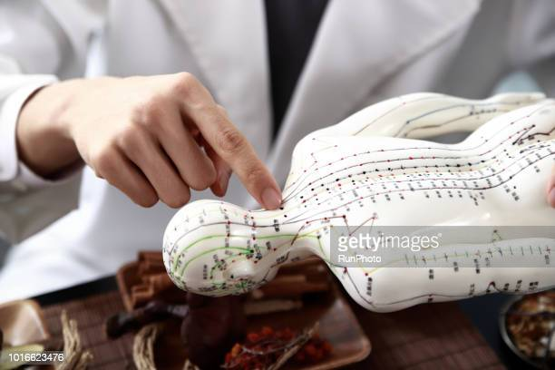 Oriental medical doctor  pointing at acupuncture point on model
