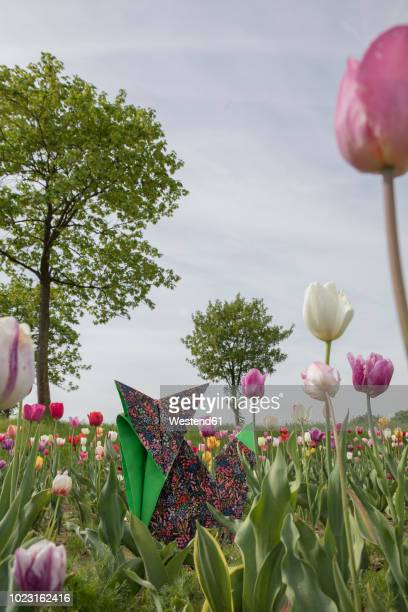 origami fox in tulip field - impatience flowers stock pictures, royalty-free photos & images