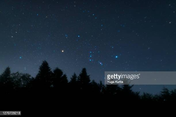 orion and stars rising over a dark forest - constellation stock pictures, royalty-free photos & images