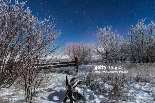 orion rising in the moonlight over an old fence in southern alberta, canada. - canadian prairies stock photos and pictures