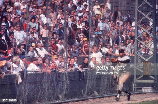 Orlando Cepeda of the San Francisco Giants makes the catch during an MLB game against the Los Angeles Dodgers on June 4 1961 at the Los Angeles...