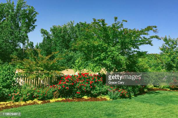 ornamental garden in backyard of suburban home - red roses garden stock pictures, royalty-free photos & images