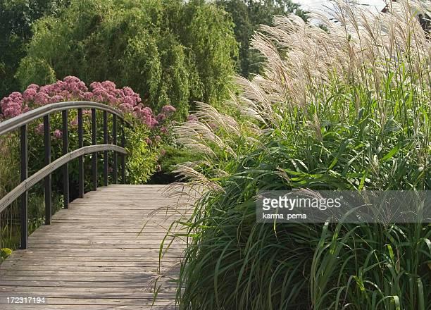 Ornamental grass next to a long wooden bridge