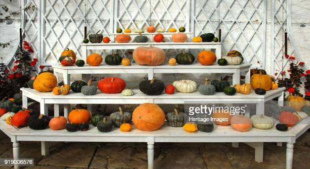 Ornamental pumpkins and squashes in the Vine house Audley End Saffron Walden Essex circa 2006