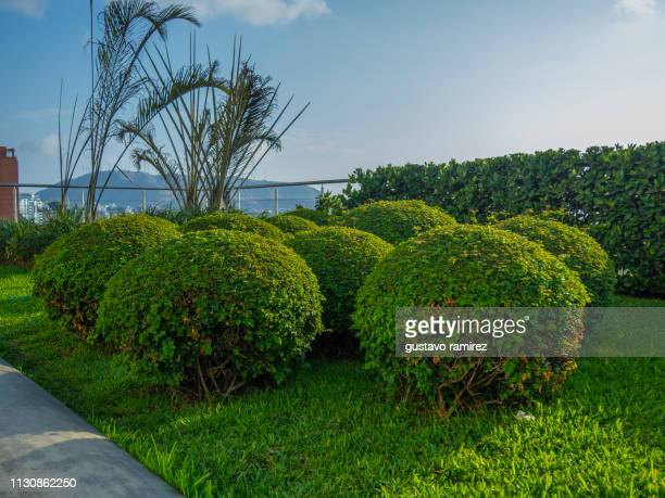 ornamental trees in the garden