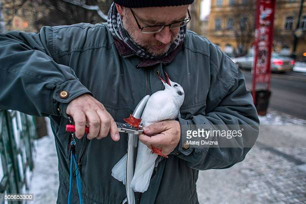 Ornithologist Ivan Miksik from the Bird Ringing Centre of the Czech National Museum holds a gulls as he rings it on the bank of the Vltava river on...