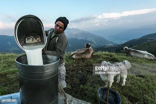 Orobic Alps (Alpi Orobie Valtellinesi) Natural Park - Valtellina, pouring down fresh milk