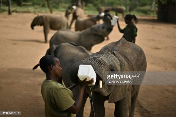 TOPSHOT Orphan elephant calves are fed a special formula inside the boma by their keepers at Reteti Elephant Sanctuary in Namunyak Wildlife...