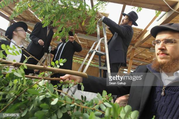 Orthodox Jews prepare a sukkah, an outdoor hut, by covering its roof with branches as part of the Sukkot holiday at the Chabad center on October 12,...