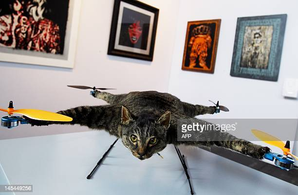 Orville a flying helicopter cat made by artist Bert Jansen is presented at the KunstRai art fair in Amsterdam on May 30 2012 Some 70 Dutch art...