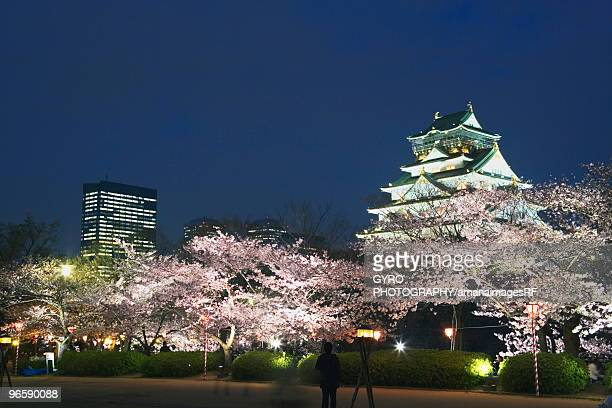 Osaka Castle and cherry blossoms in the night, long exposure, Osaka city, Osaka prefecture, Japan