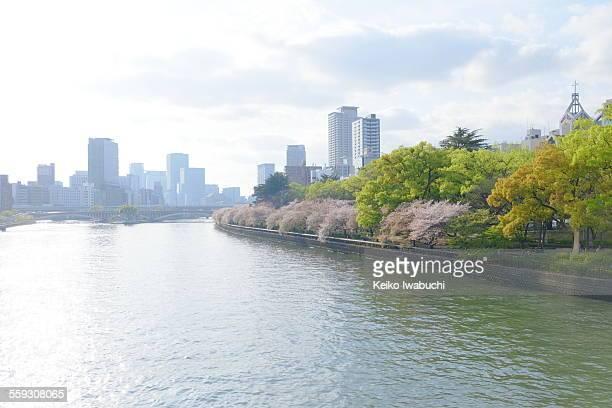 Osaka cityscape with cherry blossom along a river