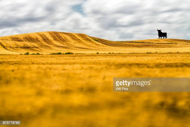 Osborne bull on a mature wheat field long exposure shot Castilleja del Campo Seville Spain The Osborne bull is a 14metre high blackÊsilhouettedÊimage...