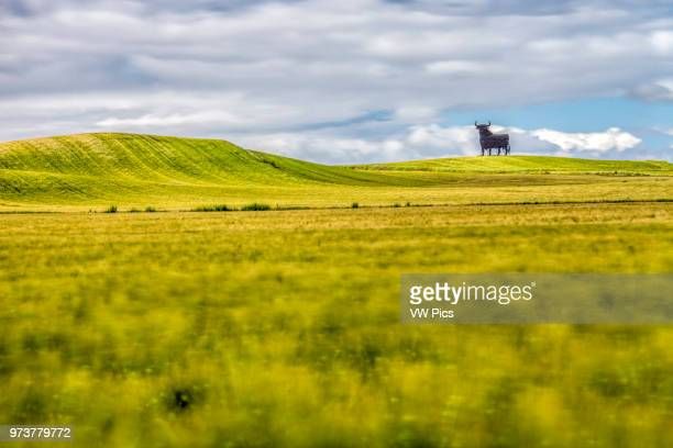 Osborne bull on a wheat field long exposure shot Castilleja del Campo Seville Spain The Osborne bull is a 14metre high blackÊsilhouettedÊimage of...