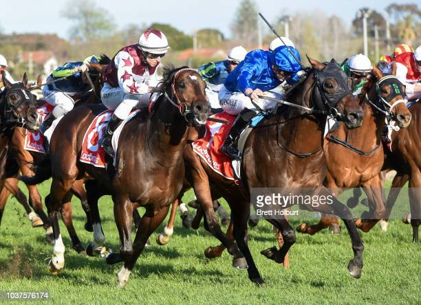 Osborne Bulls ridden by Craig Williams heads to the barrier before the Ladbrokes Sir Rupert Clarke Stakes at Caulfield Racecourse on September 22...